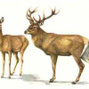 Census of Ungulates